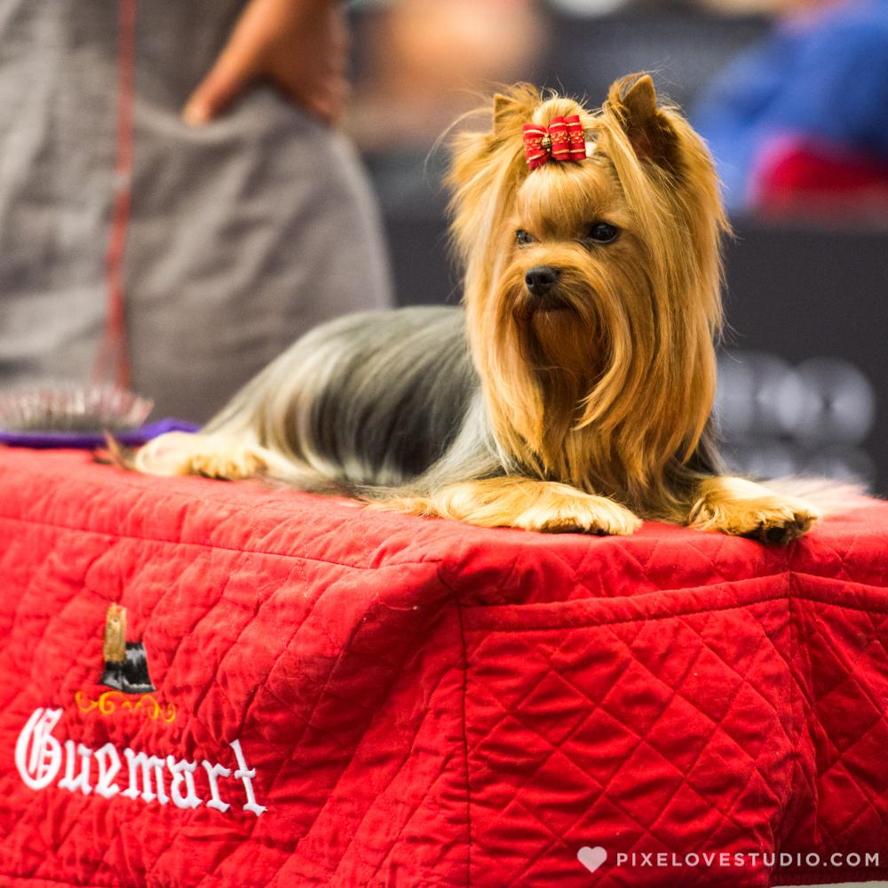 Expo Canina 2017