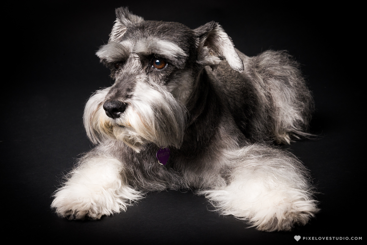 pixelove-studio-dog-photo-bolita-w-1