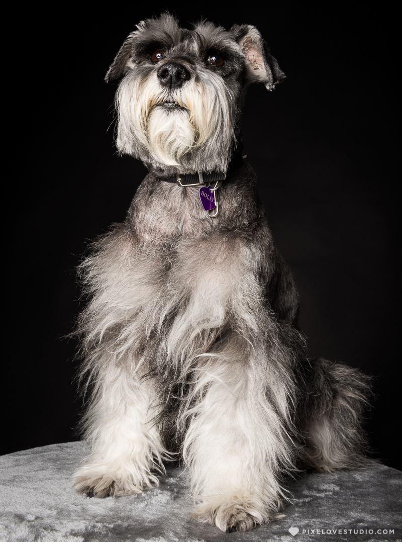 pixelove-studio-dog-photo-bolita-w-10