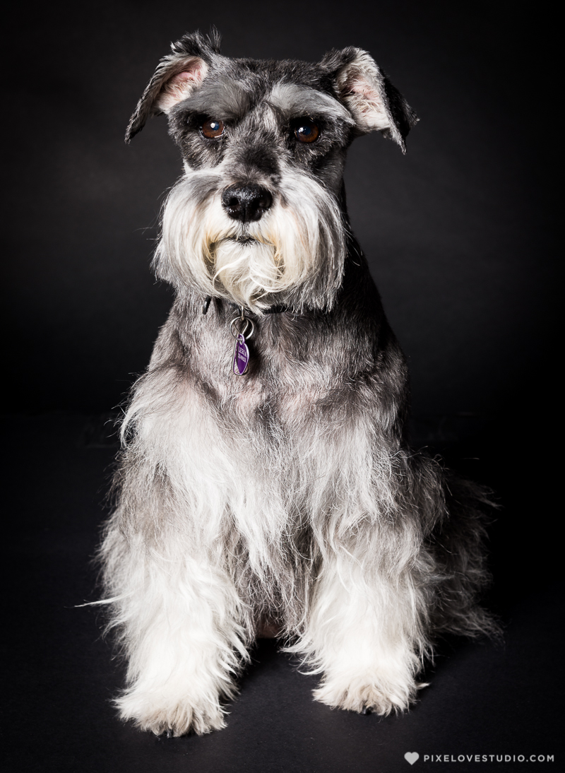 pixelove-studio-dog-photo-bolita-w-2