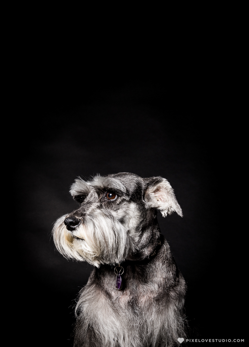 pixelove-studio-dog-photo-bolita-w-3