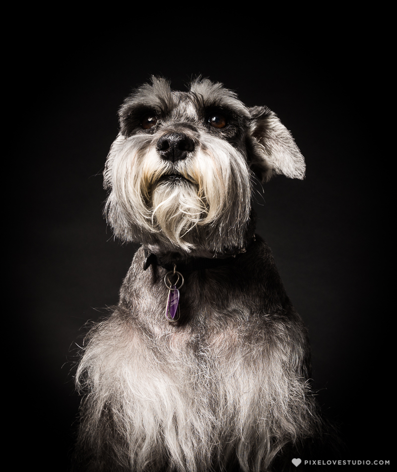 pixelove-studio-dog-photo-bolita-w-4