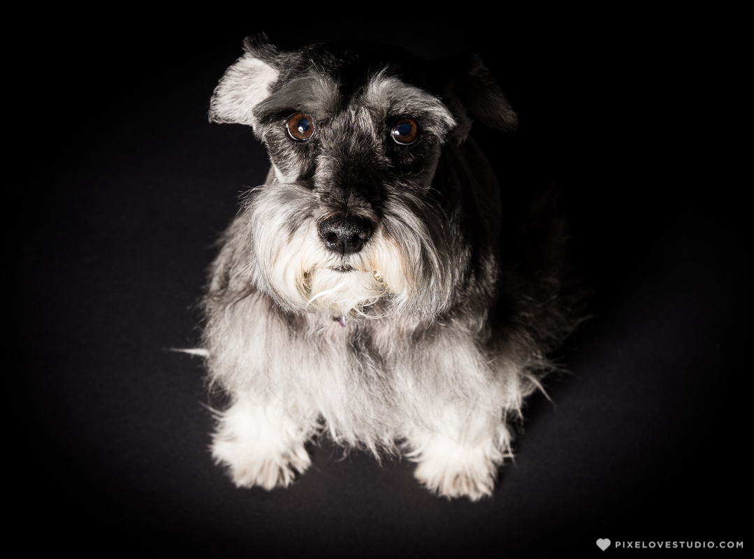pixelove-studio-dog-photo-bolita-w-5