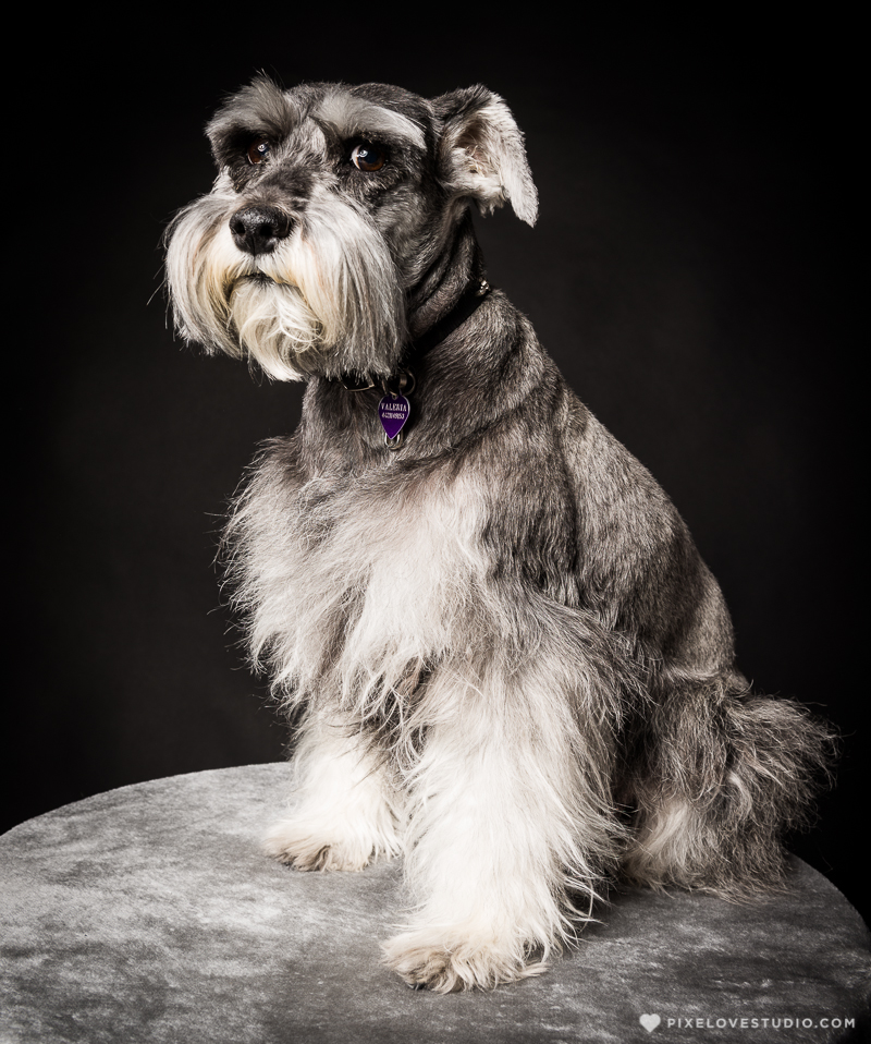 pixelove-studio-dog-photo-bolita-w-6