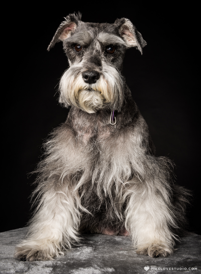 pixelove-studio-dog-photo-bolita-w-7
