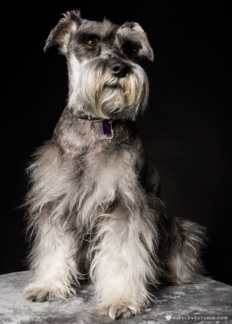 pixelove-studio-dog-photo-bolita-w-8