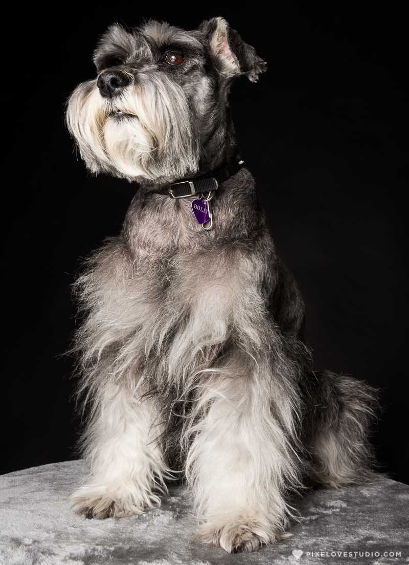 pixelove-studio-dog-photo-bolita-w-9
